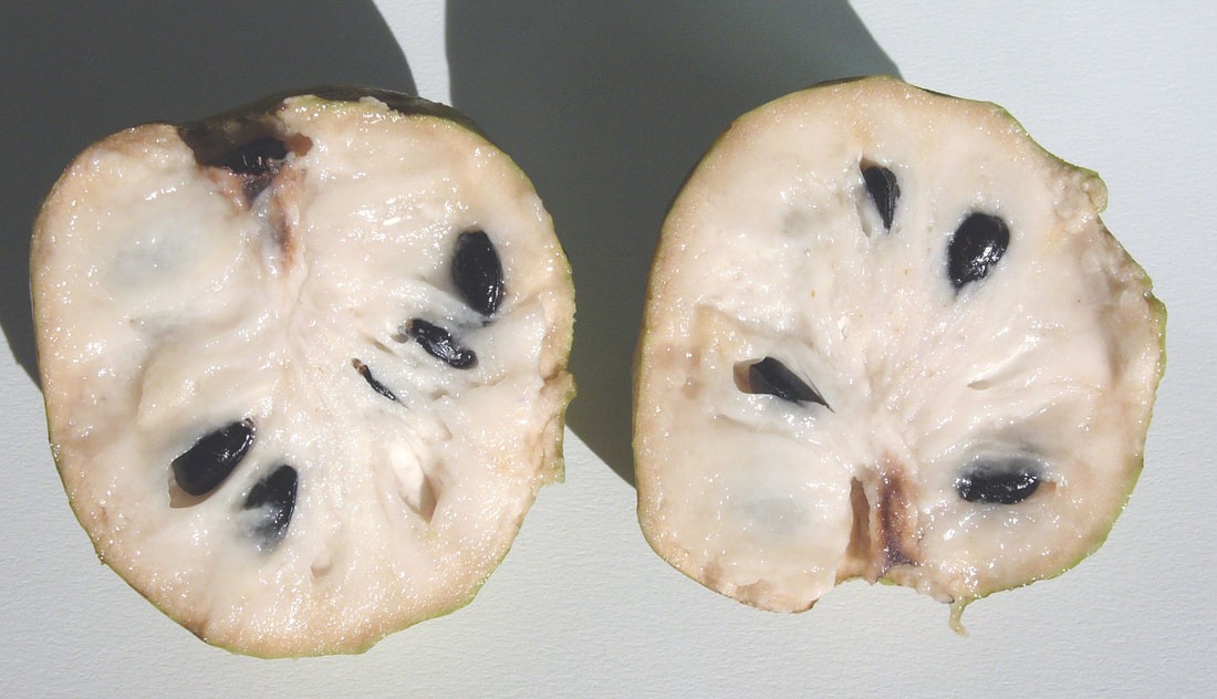 Halved cherimoya fruit showing thin green rind, creamy white flesh and large, dark, glossy seeds