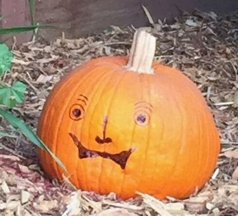 Intact mature pumpkin sitting on bed of wood chips. Silly face drawn on the pumpkin with a black marker