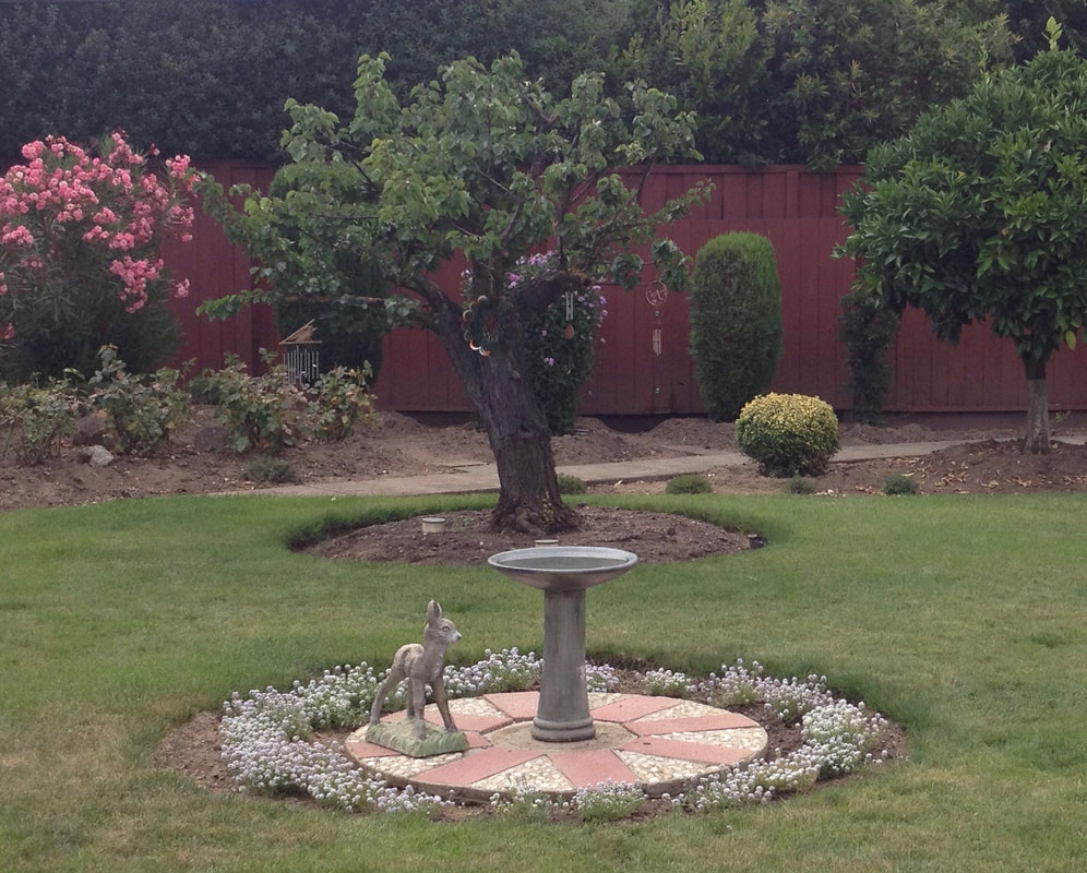 Landscape with bird bath and a small fawn statue on pavers in the fireground, an older, gnarled apricot tree in the midground, and a pink flowering shrub and a reddish-brown wooden fence in the background
